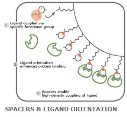 図3 タンパク質とアゴニストの相互作用