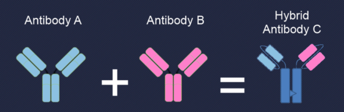 図1. Bi-specific抗体