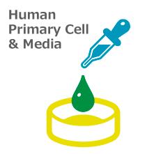 ヒトプライマリ細胞/培地