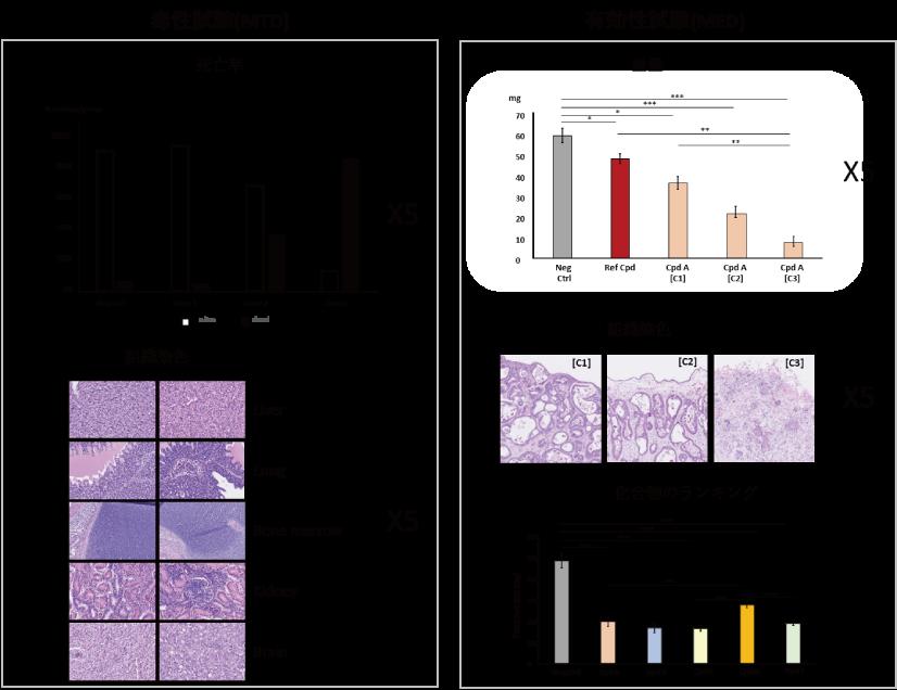 図1.3 毒性試験と有効性試験イメージ