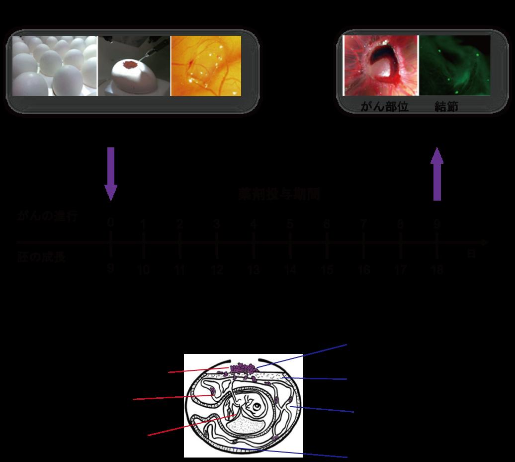 図3. ワークフロー