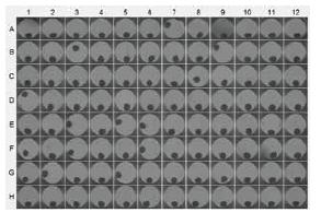 図3. プレート中のマイクロティッシュの大きさ