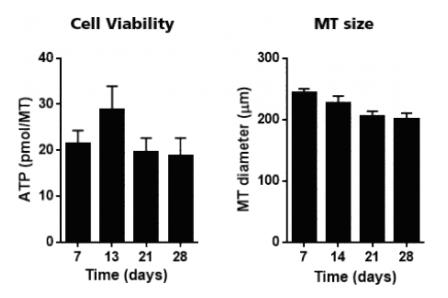 図1. 構成細胞のバイアビリテとサイズ
