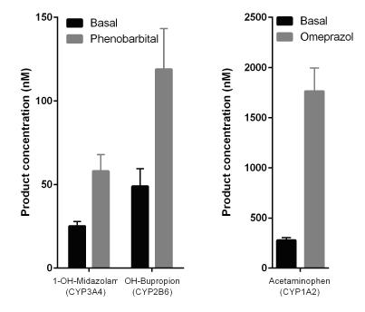 図4. 3D InSight™ マルチドナー肝臓マイクロティッシュにおけるCYP誘導性の保存
