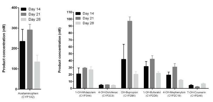 図3. CYP 活性の培養期間全体にわたる変化