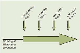 図1. 進行フロー