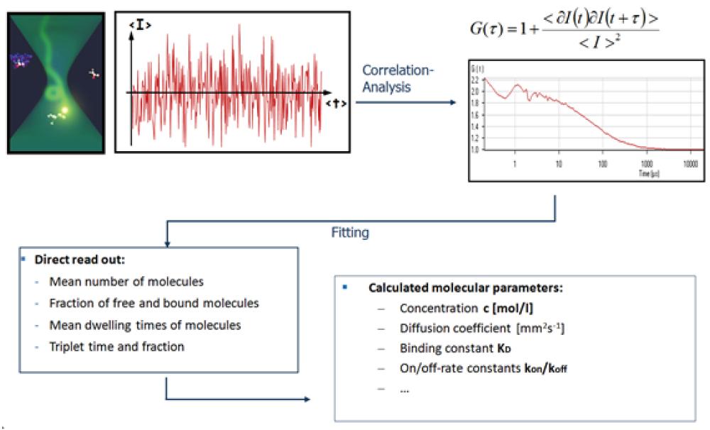 図2. FCSによる測定フロー