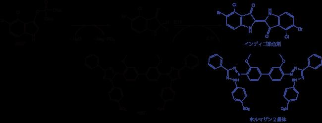 図2. AP活性の比色検出