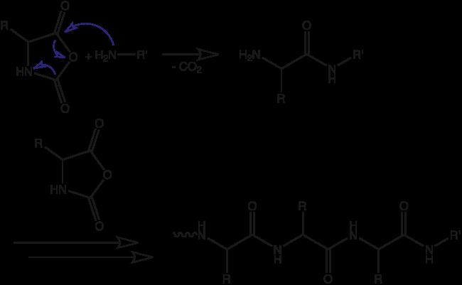 図2. N-カルボキシ無水物の開環重合反応