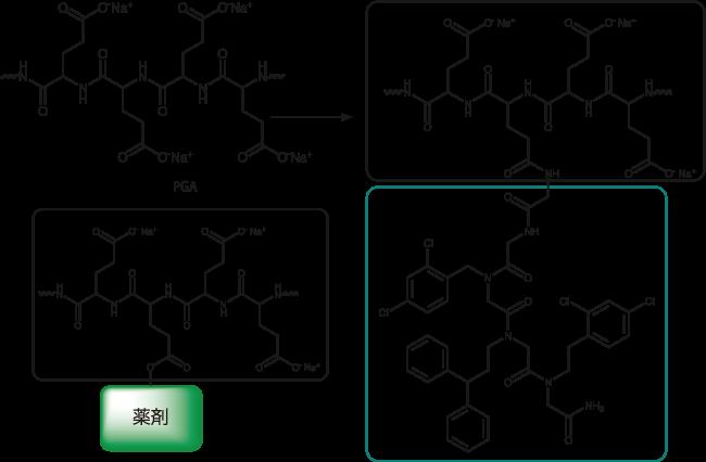 図4. 難溶のペプトイド化合物に対し、PGAを付与することで水溶性と膜透過性を付与