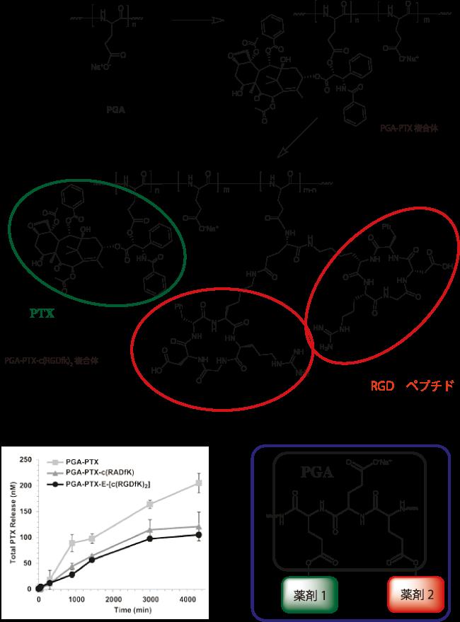 ポリ ガンマ グルタミン酸