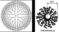 図4. 星形ブロックデンドリマー(polytrimethyleneimine) dendrimer-block-(polysarcosine)64)模式図とX線小角散乱法によるサイズイメージ