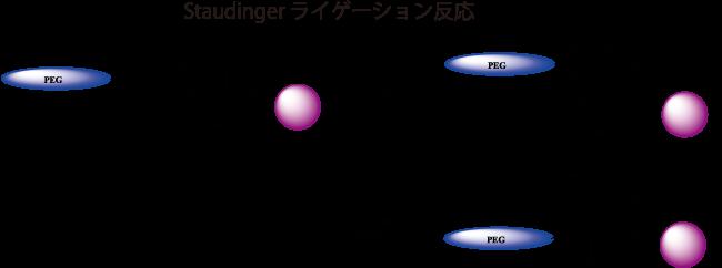 図6. Staudingerライゲーション反応