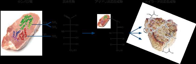 図1. メイラード反応化合物の生成過程