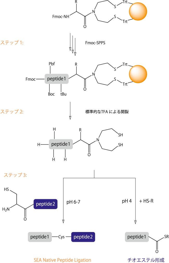 図2. SEAレジンを用いたペプチド合成