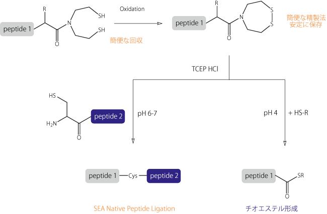 図3. ジチアゼパン環の形成