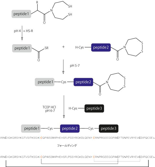 図4. 3つのフラグメントのワンポット合成