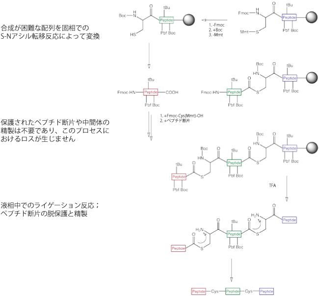 図5. 固相におけるライゲーション反応