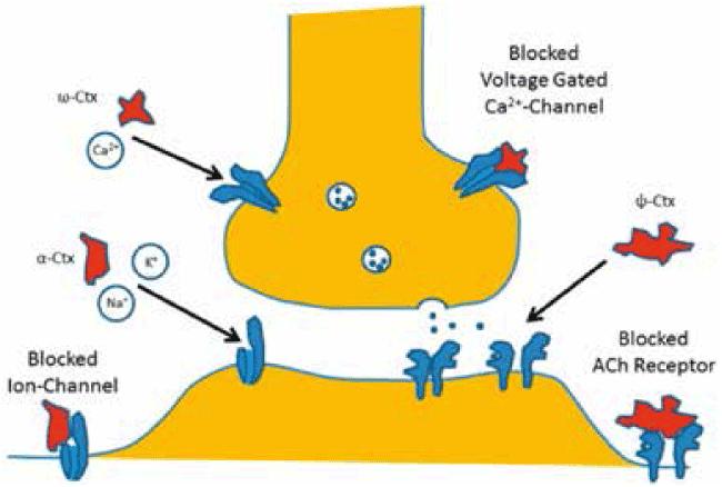 図1. チャネル模式図
