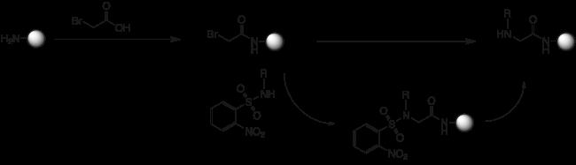 図1. Ns基を用いるペプトイド合成手法