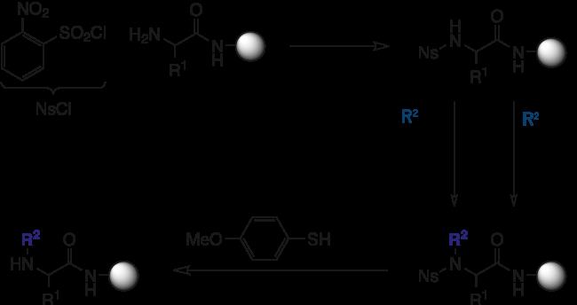 図1. Ns基によって一時的にアミノ酸のアミンを保護し、アルコールを用いた光延反応、もしくはハロゲン化アルキルを用いる固相 N-アルキル化反応