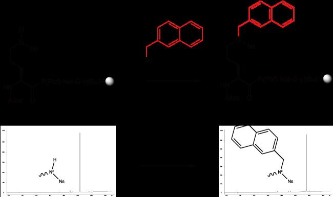 図2. 光延反応を用いて、10分で立体的に嵩高いナフチル基をペプチド側鎖に導入する反応スキーム(上段)出発物質と生成物の純度をRP-HPLCによって確認しています(下段)