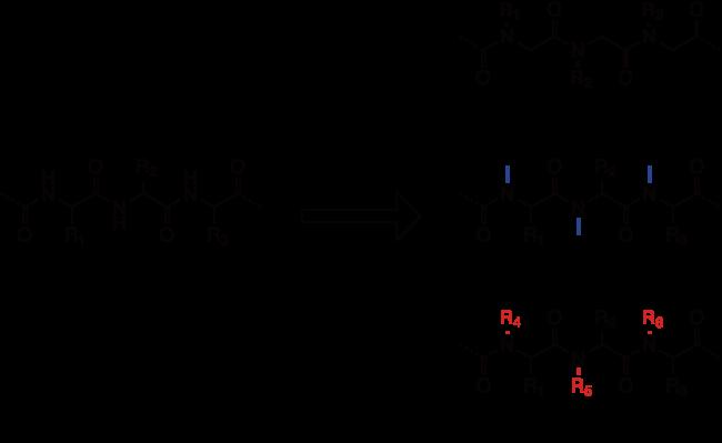 図1. ペプチドからペプトイドへの変換
