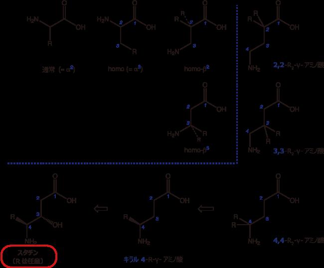 図1. β-アミノ酸、γ-アミノ酸、スタチンの比較