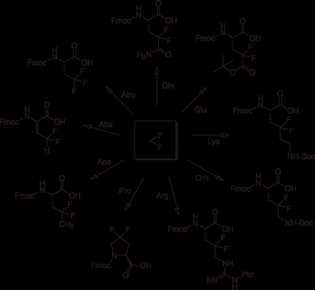 図3. 各種アミノ酸のγ、γ-ジフルオロ化