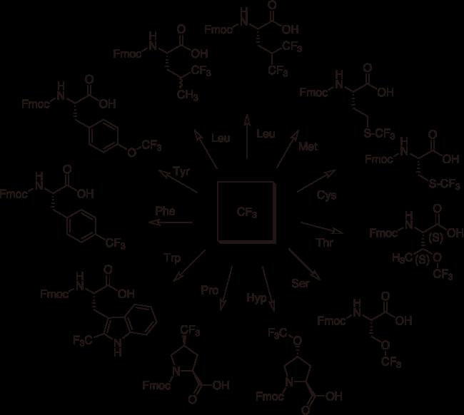 図4. 各種アミノ酸の側鎖に対するトリフルオロメチル基付与