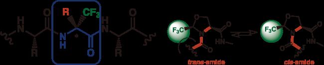 図6. α-トリフルオロメチルアミノ酸