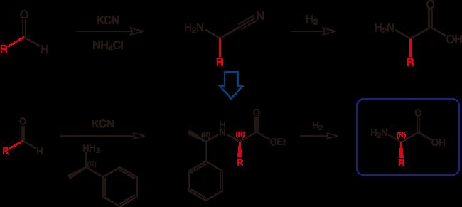 図1. 各種アミノ酸のジメチル化体