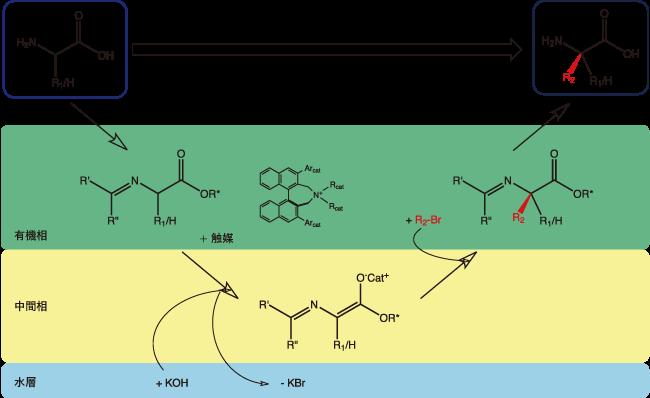 図1. 不斉相間移動触媒を用いる場合の合成経路
