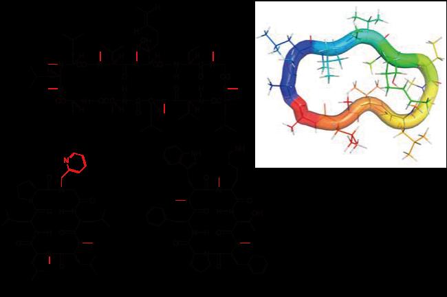 ペプトイドとN-メチル化されたペプチドモチーフを含有する環状ペプチド