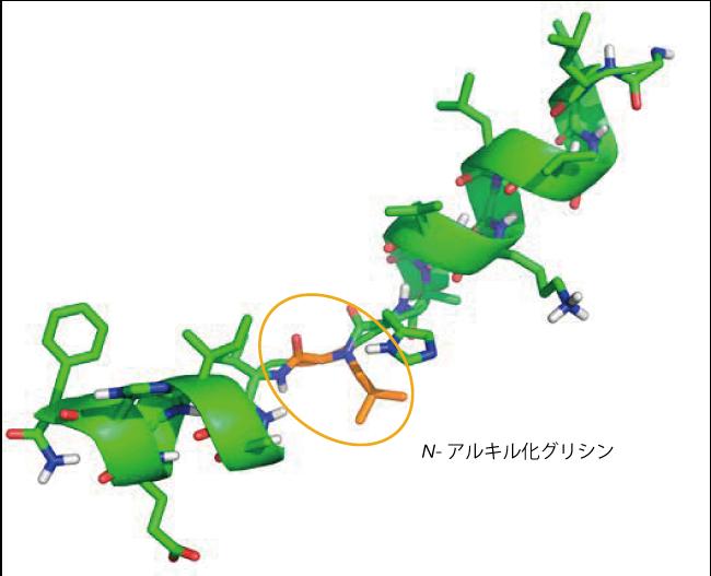 抗菌活性を有するペプトイド - ペプチドハイブリッド化合物のNMR構造(オレンジ色:N -アルキル化グリシン)