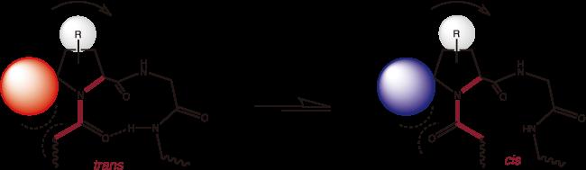 プロリン骨格を利用した置換反応