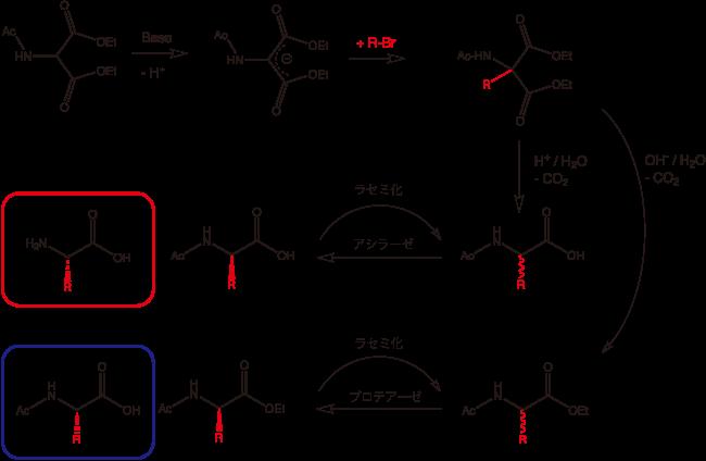 アセトアミドマロン酸を経由する合成法