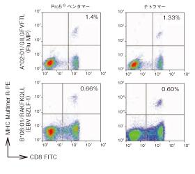 図3. CD8FITCとの末梢血細胞(PBMC)試料のMHCマルチマーによる共染色