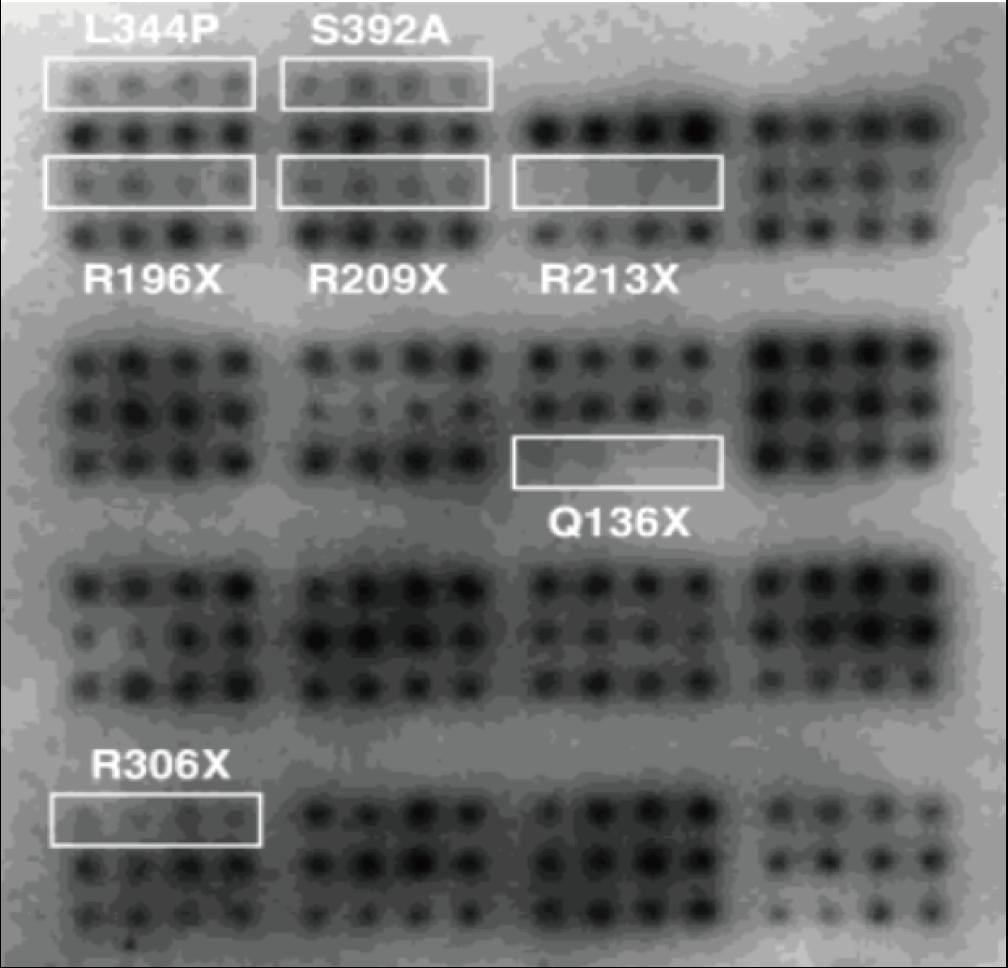 図2. p53タンパク質アレイを用いたCKIIリン酸化アッセイの結果
