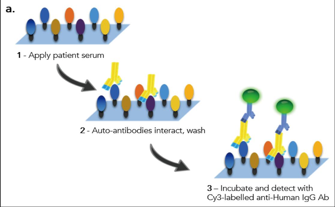 図1. ワクチン接種後の自己抗体アッセイの概略