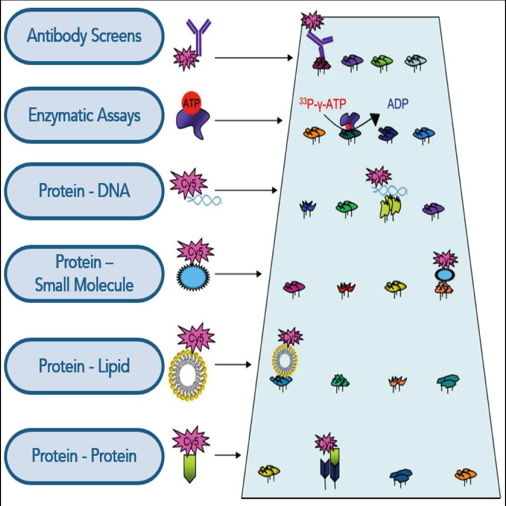 図1. タンパク質の異なるタイプの物質との相互作用の模式図 (Hall, Ptacek & Snyder, 2007)