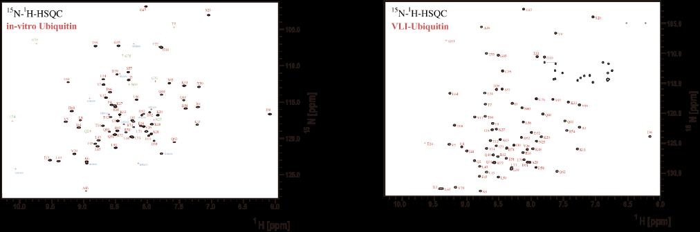 図2. 作製されたヒトユビキチン(左)および市販品のヒトユビキチン標準(右)のHSQCの比較結果
