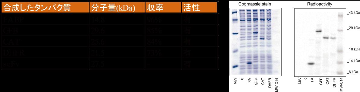 図3. 安定同位体ラベルタンパク質の作製例